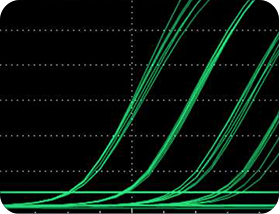 qPCR Curves IDT