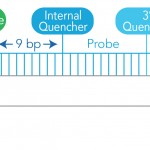 28/09/15: Increase sensitivity and precision in your qPCR experiments