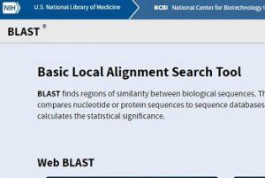ncbi-blast-nucleotides-protein