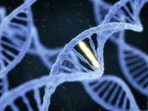 The CRISPR Patent Battle: Whose Idea was it?